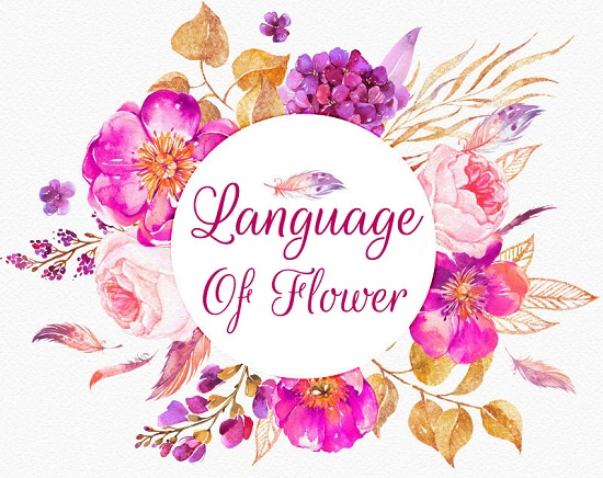 """Flower Speak the Language of Heart""… Know it Better!!"