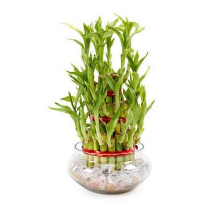 Luck plants