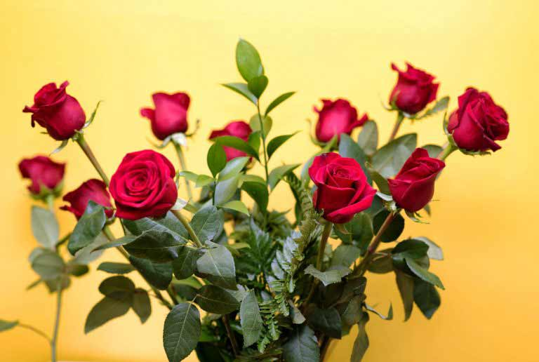 About Red Roses