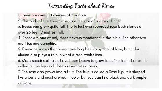 Amazing Facts about Roses