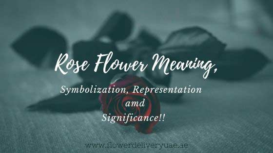 Meaning of Rose Flower