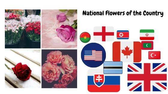 Rose as National Flowers of the Country