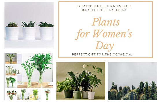Women's Day green plants