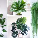 8 Amazing Houseplants to Decorate Home with Goodness of Nature!!