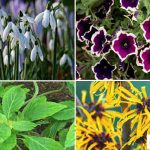 10 Most Amazing Flowering Plants that Thrive in UAE during Winters 2020!!