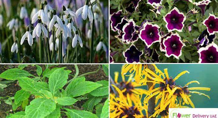 tenflowersplant