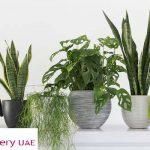 Refreshing Plants Perfect to Beat UAE Scorching Summer Heat!!