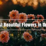 15 Most Beautiful Flowers in the World!!