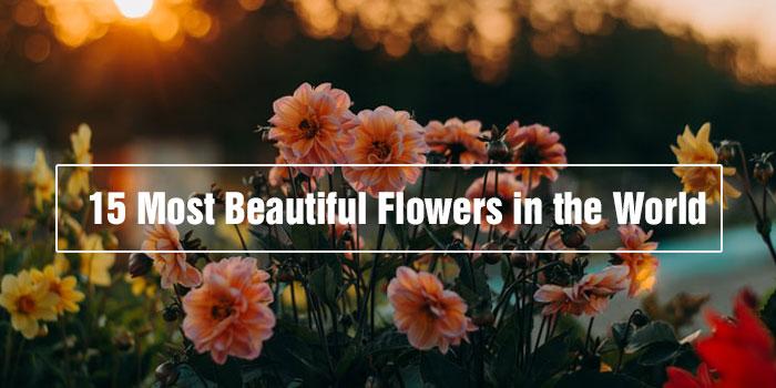15 Most Beautiful Flowers