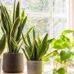 8 Interesting Indoor Plants Home Decoration Ideas!!
