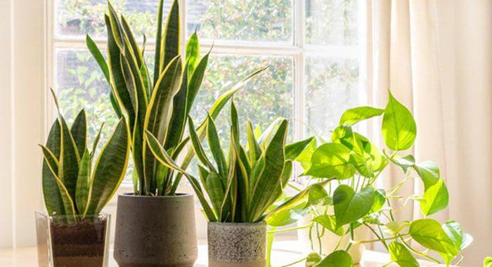 8 Interesting indoor plants