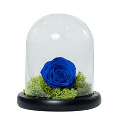 Elegant Blue Rose