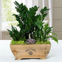 Mini Wooden Pot Garden