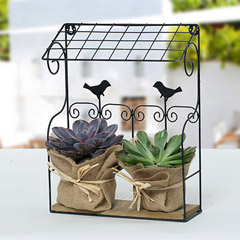Elegant Echeveria Plant With Wooden N Iron Stand