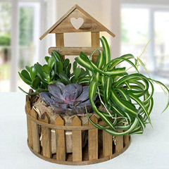 Amazing Plants In Wooden House Arrangement