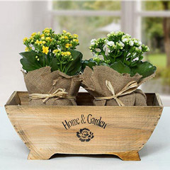 Dual Elegance In Wooden Container