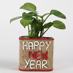 Money Plant In New Year Glass Vase