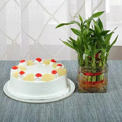 Auspicious Lucky Plant & Pineapple Cake Combo