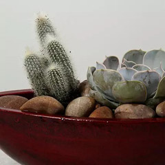 Green Echeveria and Cactus with Natural Stones