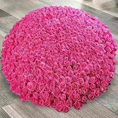 Arrangement of 500 Dark Pink Roses