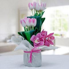 Tulips And Cymbidiums