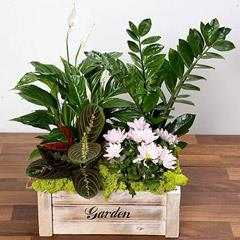 Beautiful Green Garden Box