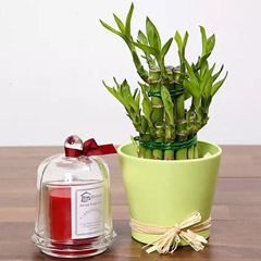 2 Layer Lucky Bamboo and Aroma Candle