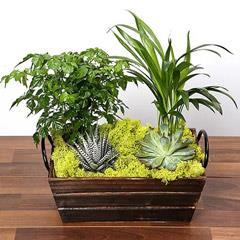 Mini Green Garden