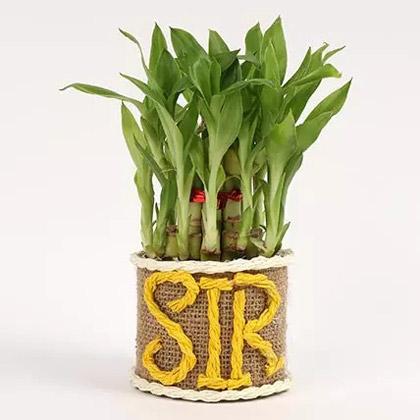 Elegant Lucky Bamboo For Sir