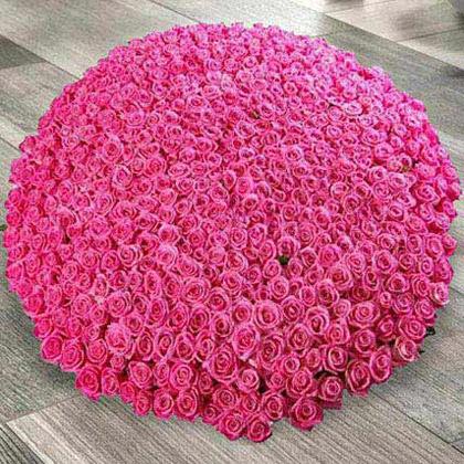Arrangement of 500 Dark Pink Roses
