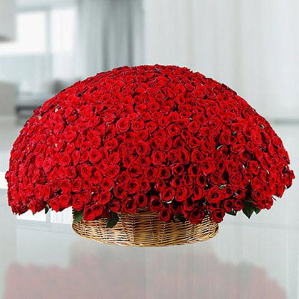 800 Red Roses Flower Arrangement