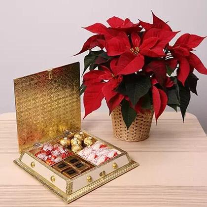 Chocolates and Poinsettia Plant Combo