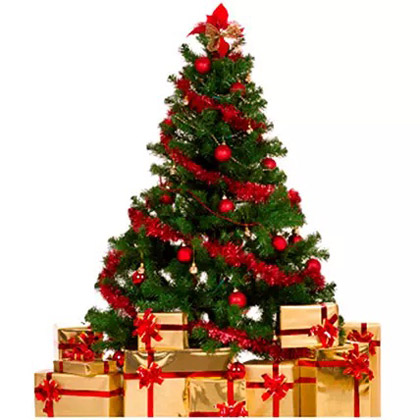 Fresh and Real Xmas Tree with Decoration